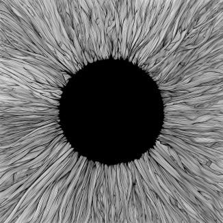 VOLA-Witness-scaled